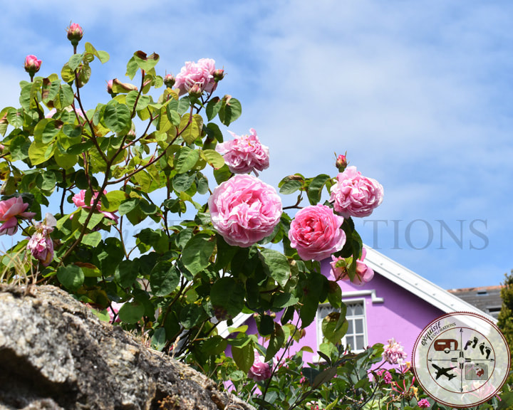 Two Easy Day Trips from Dublin: Dalkey and Skerries - A Tale of Two Castles - Travel Tips by exquisitEXPLORATIONS Travel Blog, Roses, Rose Gardens