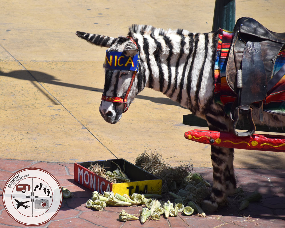Donkey painted like a zebra in Tijuana. They do it for the tourists, but I hate it. Poor things...